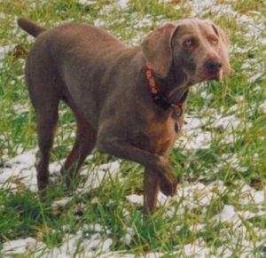 Tess in the field